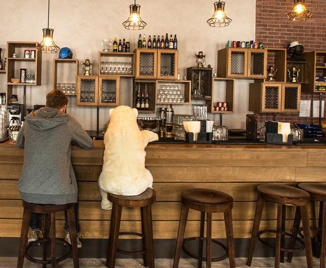 A man and a polar bear drink at the bar