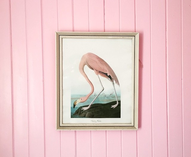 Pink on pink, flamingo on wall