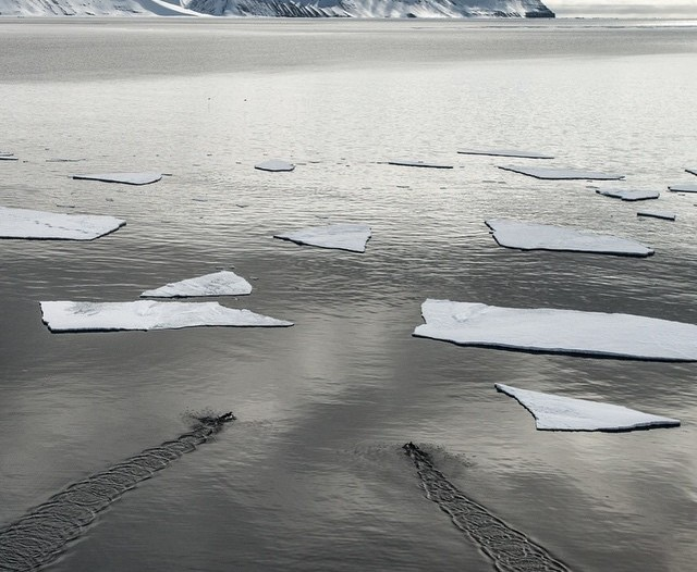 Icey waters in Svalbard
