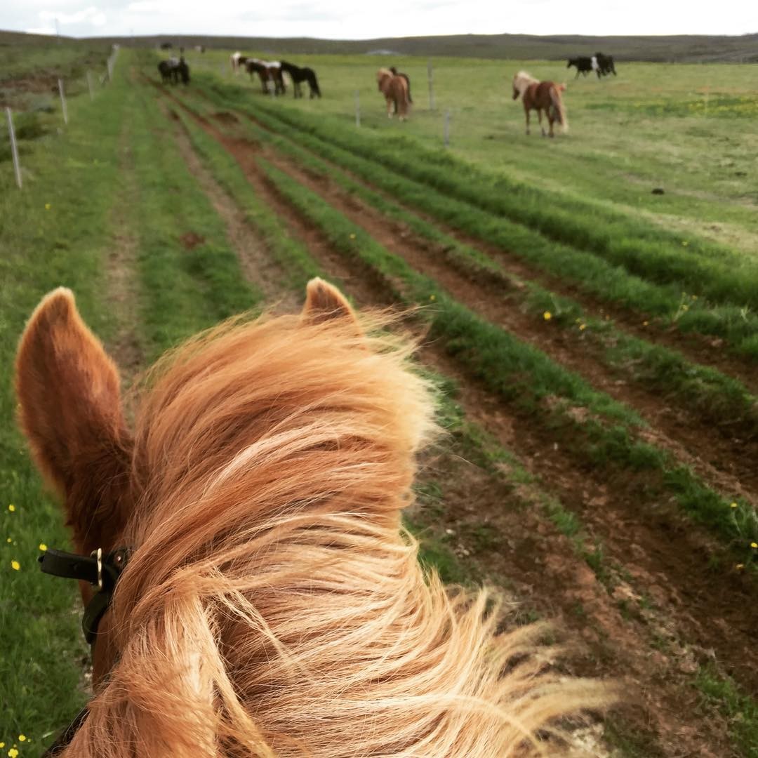 The view from the back of my horse in Iceland