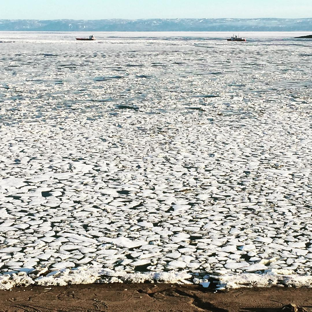 Sea ice packs Frobisher Bay in July 2015