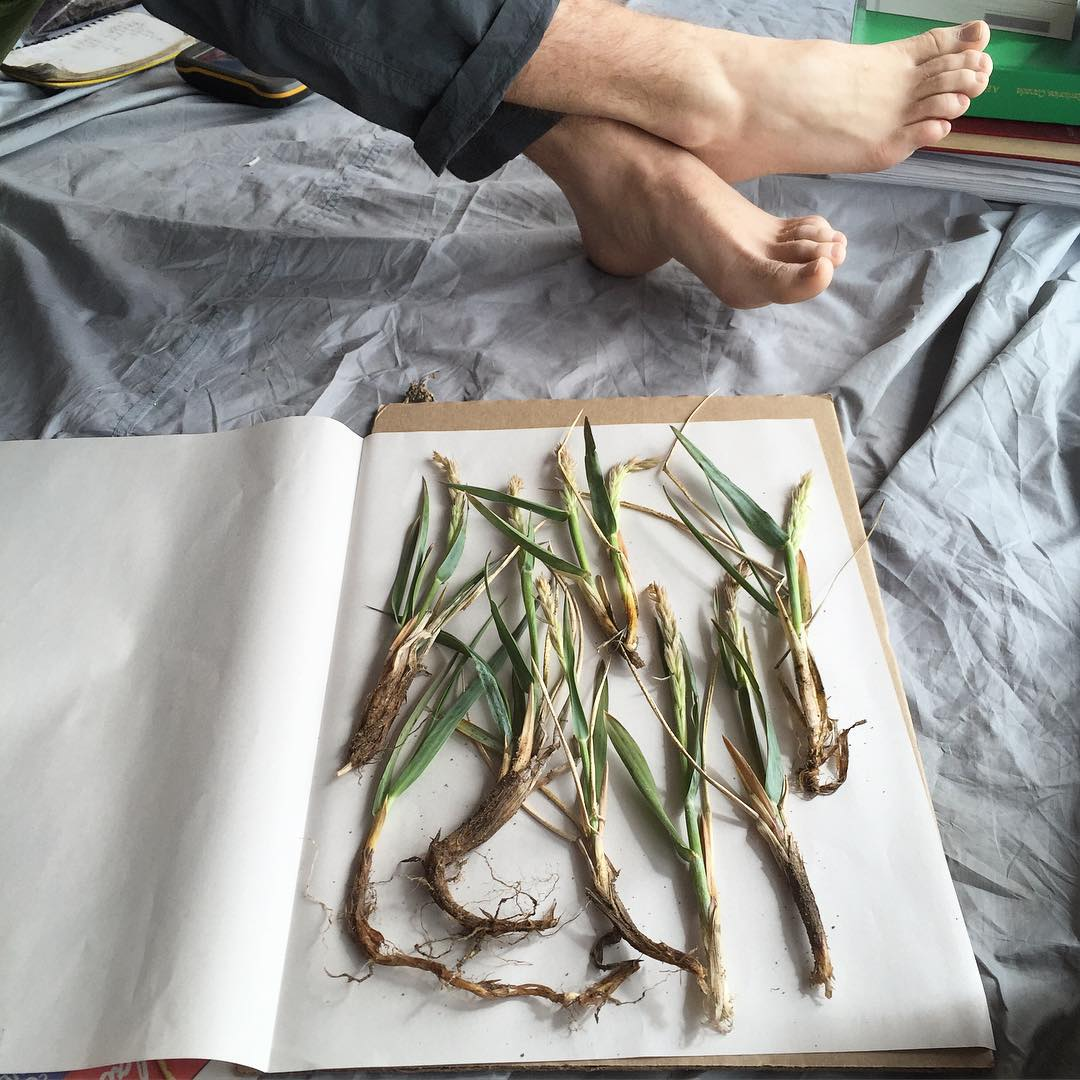Prepping Arctic plants for the herbarium