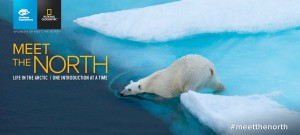 A polar bear slips into the water from the edge of some bright blue arctic ice.