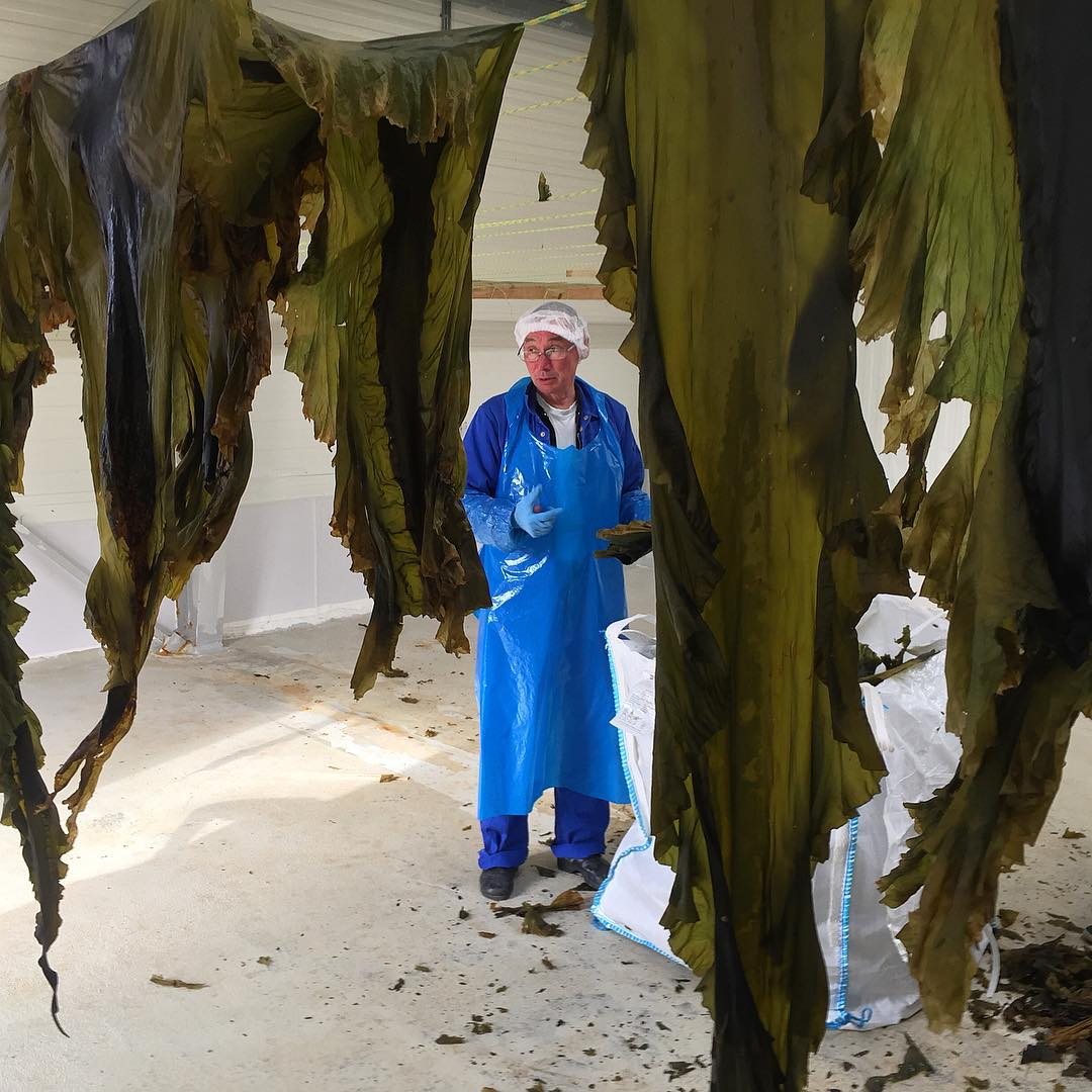 Maki in his seaweed facility drying seaweed