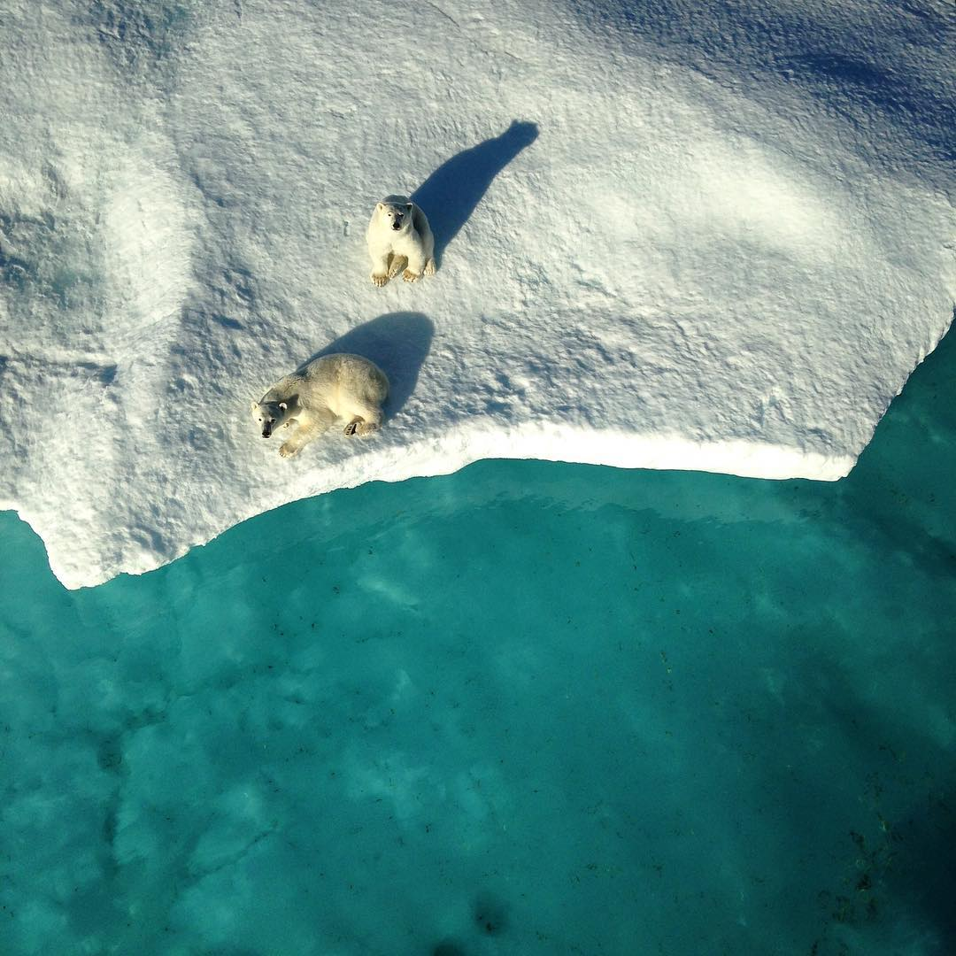 Two polar bears look up at the ship from the edge of an ice floe