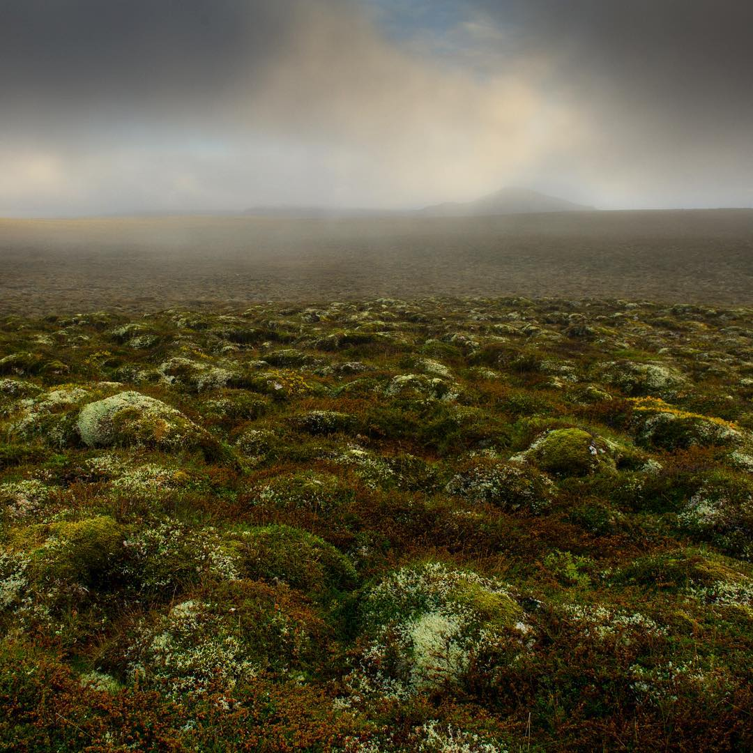 Tundra and fog along Iceland's northeast peninsula