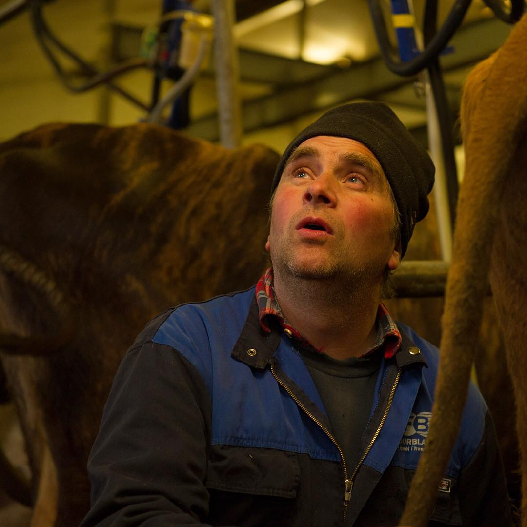 Eyberg looks up during milking