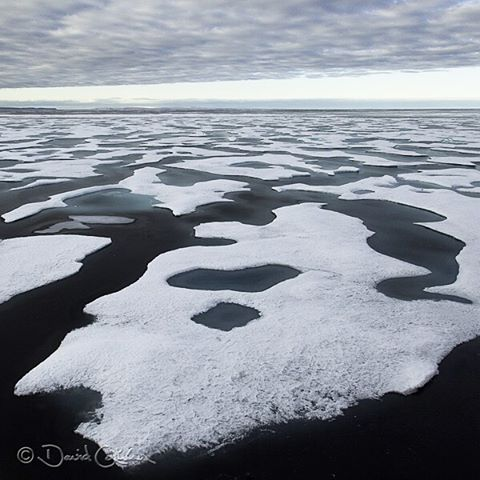 Sea ice extends ahead