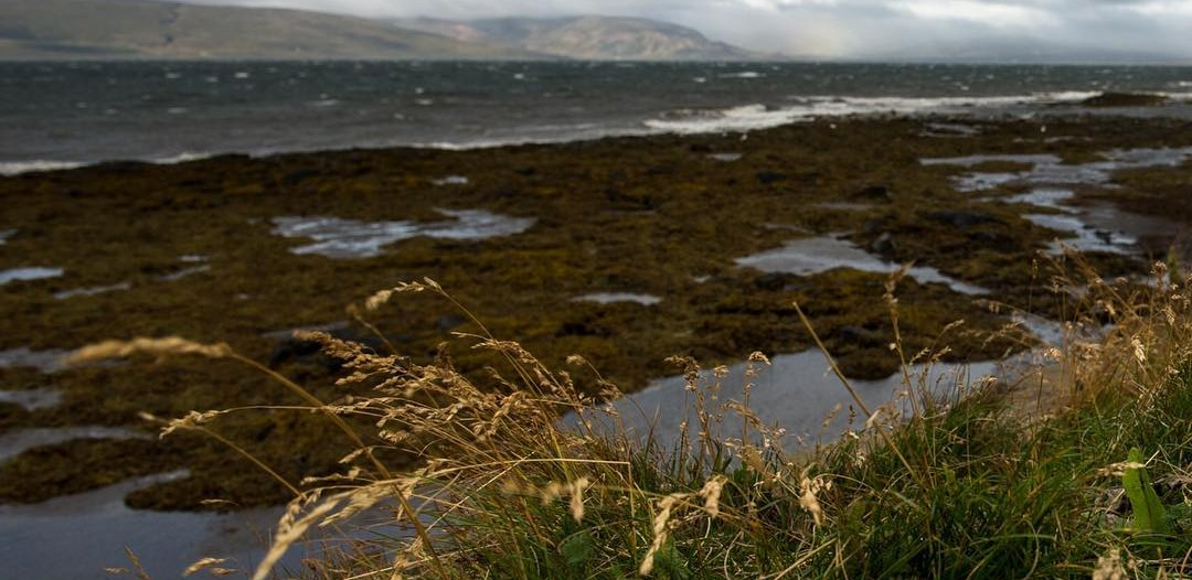 Wind whips Iceland's shore