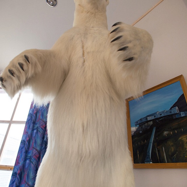 A taxidermied polar bear looms above the photographer