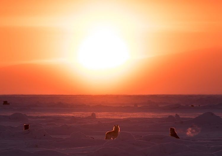 Dogs set against a glowing sunset.