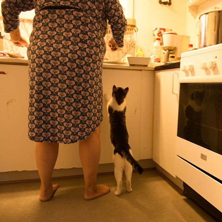 A cat peeks onto a counter.