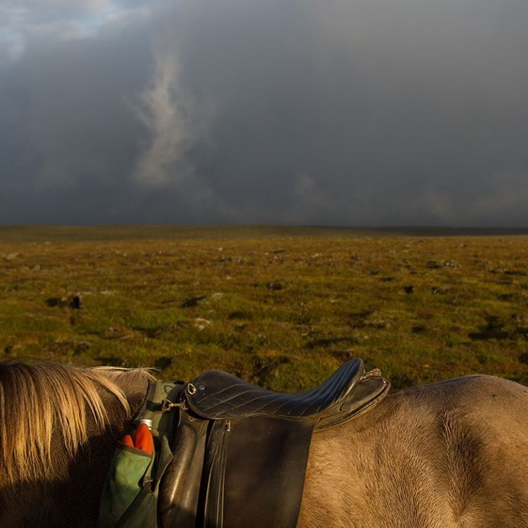 A saddled horse in front of a beautiful Icelandic landscape.