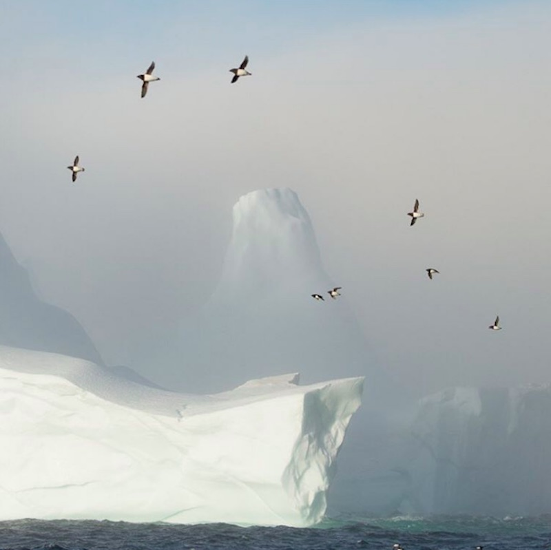 Birds fly over an iceberg in Greenland.