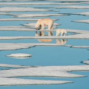 A mama polar bear and her cub walk on melting sea ice in Nunavut.