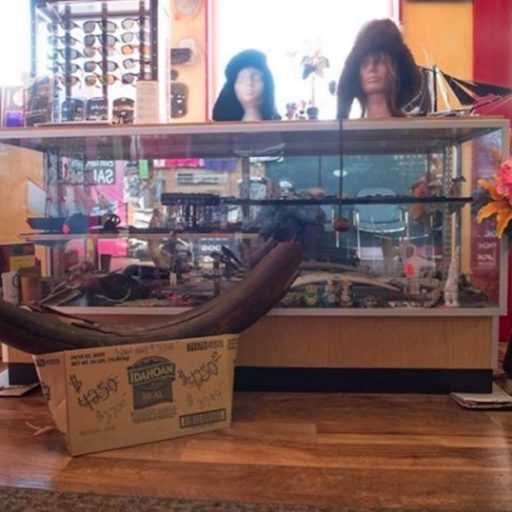 Mastodon tusk on sale in Alaska.