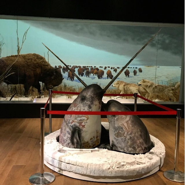 An exhibit at the Canadian Museum of Nature.