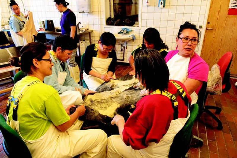 The women gather around the sealskin to clean it.