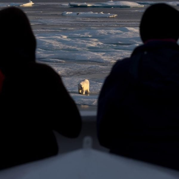 Early morning polar bear in Nunavut.