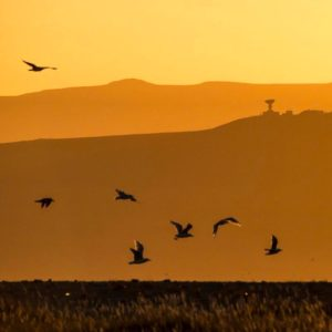 Birds fly at sunset in Russia.