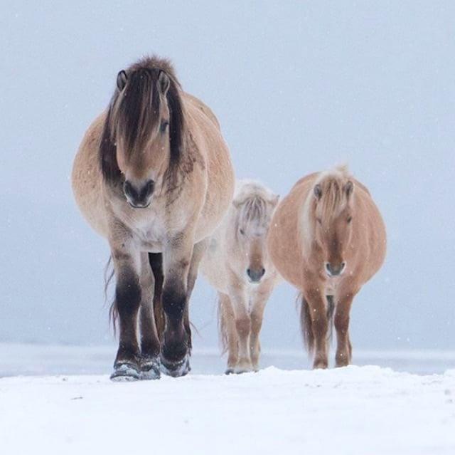 Wild horses in Russia.
