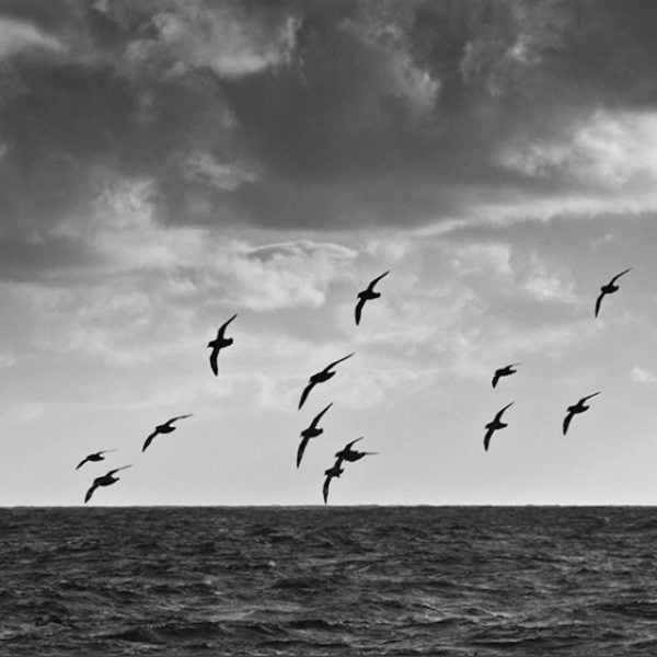 Some birds in the Drake Passage in Antarctica.