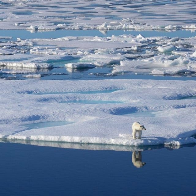 A polar bear in the Canadian arctic.