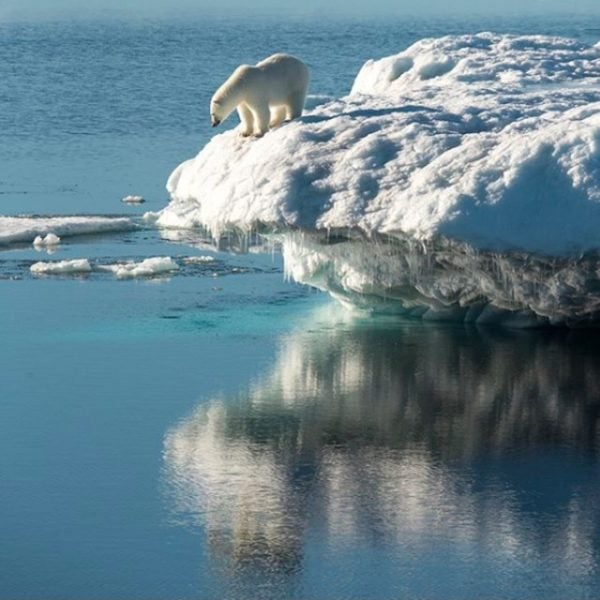 A polar bear in Nunavut.