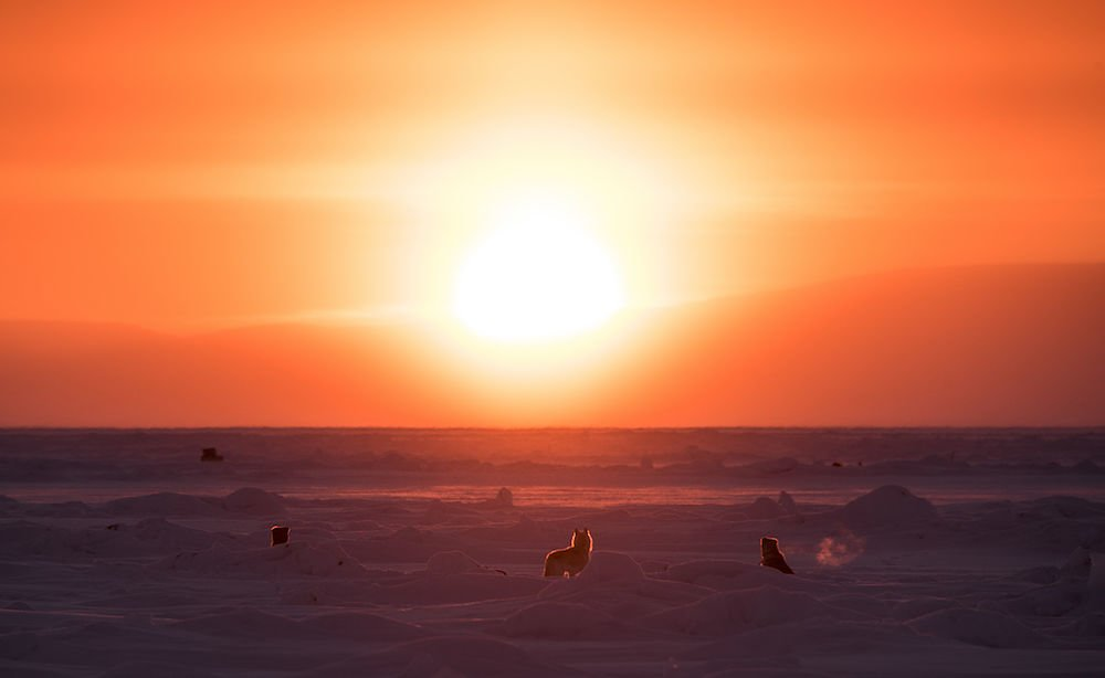 Sled dogs sit on the sea ice just off shore from the hamlet of Pond Inlet, Nunavut, Arctic Canada.