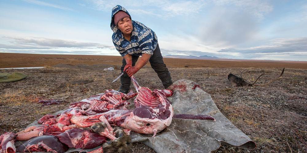 Maya Pelyatagina butchers a reindeer from her herd immediately after it has been killed.